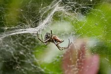 Free Spider With Prey Stock Photo - 5129180