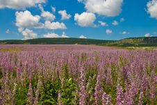 Free Wild Flowers Valley Stock Images - 5129224