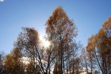 Free Through Leaves Stock Photos - 5129863