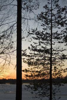 Free Trees On The Dawn Stock Photos - 5129923