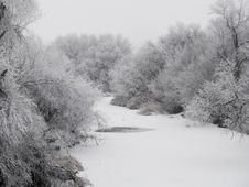 Free Frosted Creek Bank Stock Image - 5129971
