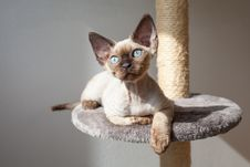 Beautiful Kitten Is Sitting On The Scratching Post And Enjoying The Warmth Of Sunlight. Stock Photography