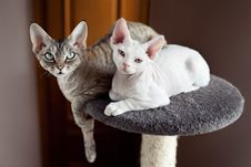 Free Beautiful Cats Are Sitting On The Scratching Post Royalty Free Stock Images - 51256189