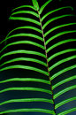 Free The Fern Leaves Royalty Free Stock Photo - 5133595