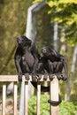 Free Hear No Evil See No Evil Stock Image - 5134511