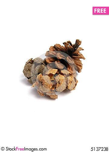 Free Three Pine Cones Royalty Free Stock Photos - 5137238