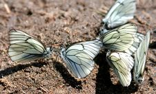 Free Congestion Of Butterflies Royalty Free Stock Images - 5130109