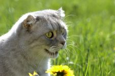 Free Cat In The Grass Royalty Free Stock Images - 5130479