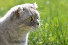 Free Cat In The Grass Stock Image - 5130481
