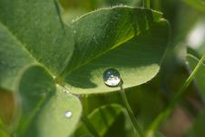 Waterdrop On A Leaf Stock Photography