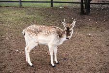Baby Deer Stock Images