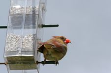 Free Perching Bird. Stock Images - 5131774