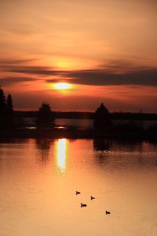 Free Ducks At Sunset Royalty Free Stock Photo - 5132325
