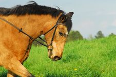 Free Horse Riding Royalty Free Stock Image - 5132856