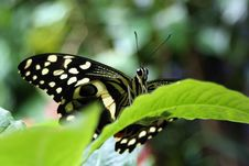 Free Closeup Butterfly Royalty Free Stock Image - 5132986