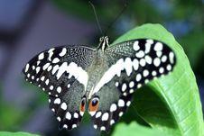 Free Eye Spot Butterfly Stock Photo - 5132990