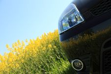 Car And A Rape Field. Royalty Free Stock Photo