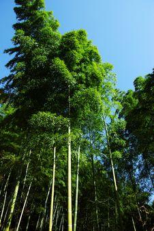 Free Bamboo Royalty Free Stock Image - 5134826