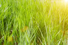 Free Beautiful Grass In Sunset Stock Photo - 5136430