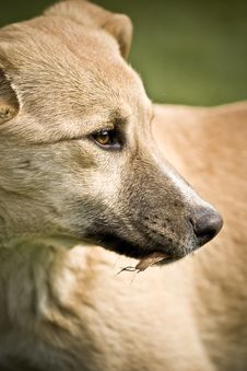 Free Portrait Of A Dog Stock Photography - 5136432