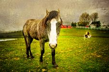 Free Fisheye Horse With Texture Royalty Free Stock Photo - 5136815