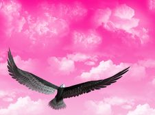 Free Eagle In The Sky Stock Photos - 5136883