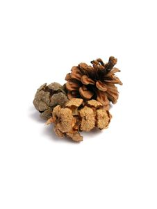 Three Pine Cones Royalty Free Stock Photos
