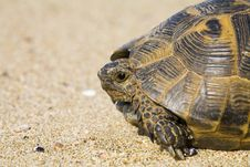 Free Spur-thighed Tortoise Stock Photo - 5137380
