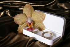 Free Wedding Rings And Orchid Royalty Free Stock Photos - 5137468