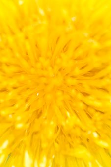 Free Close-up Of A Dandelion Stock Photos - 5137763