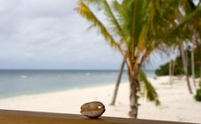 Free Seashell And Palm Stock Photos - 5137783