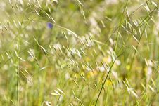 Free Green Grass Stock Image - 5137991