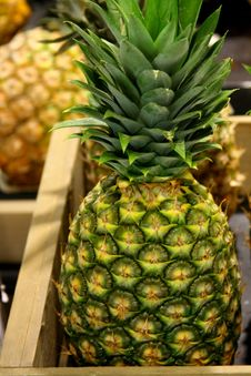 Free Fresh Pineapple Stock Images - 5138614