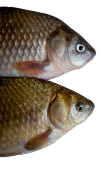 Free Fish Royalty Free Stock Images - 5139249