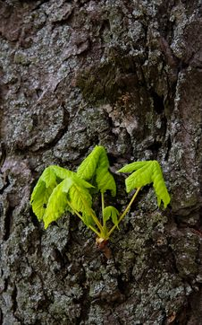 Free Branch With Young  Leaves Royalty Free Stock Photo - 5139325