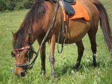 Free Brown Horse Stock Photos - 5139913