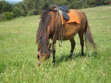Free Brown Horse Stock Photos - 5139923