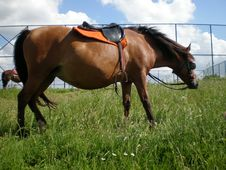 Free Brown Horse Stock Photography - 5139982
