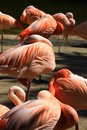 Free Flamingo Stock Image - 5140601