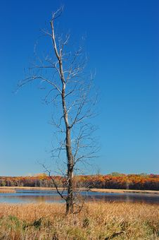 Free Bare Tree By The Lake Royalty Free Stock Photography - 5140307