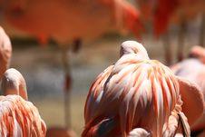 Free Flamingo Stock Images - 5140524