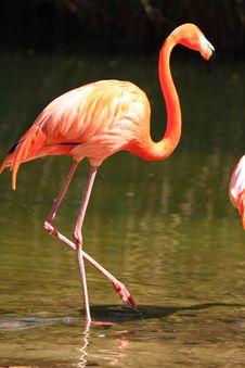 Free Flamingo Royalty Free Stock Photo - 5140645