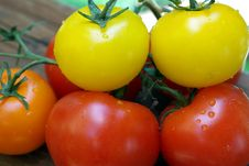 Free Red, Orange And Yellow Heirloom Tomatoes Stock Images - 5141354