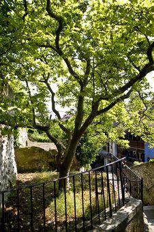 Free Tree; Grandson Switzerland Royalty Free Stock Images - 5142049