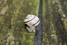 Free Snail Royalty Free Stock Photography - 5142137