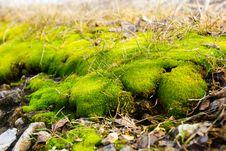 Green Moss Stock Photo