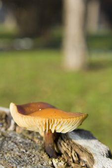 Free Wild Mushroom Stock Image - 5142351