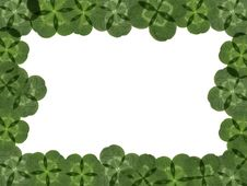 Free Four-leaf Clover Royalty Free Stock Photography - 5142627