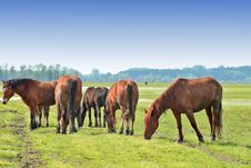 Free Wild Horses On Meadow Stock Images - 5142804