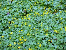 Free Yellow Flowers Stock Image - 5143201
